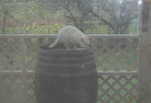 Old Klaatu on his barrel dining station