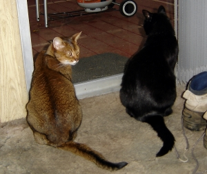 Mr. Austin, left, and Mr. Beaucastel on the right. Watching the grill on the old porch, waiting for the fish to come off.