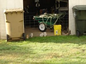 Silvie's Kittens-09202013