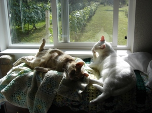 Marcus (left) and Nano the Great White Hunter enjoying a leisurely morning of lounging and viewing the table grapes.