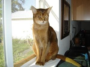 Abby cat having a good sunbath in the kitchen window.