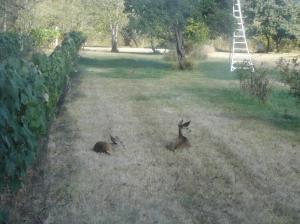 DeerFawns-ShadowsLight-09272014