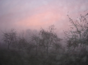 Pink Mists 11102013