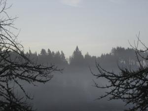 TreesInMists-03072015
