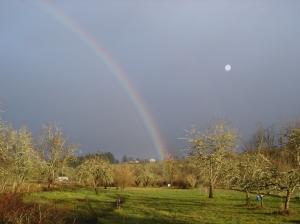 Rainbow-1-12242105