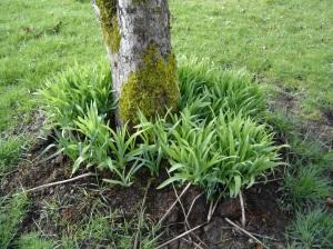 Daylilies-02272016