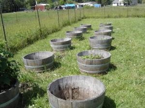 Half-barrel-planters-05242016