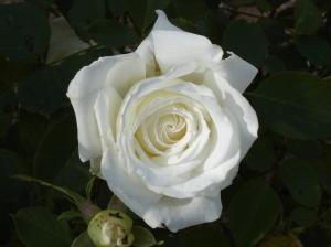 sbf-whiterose-1-9292016