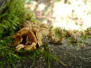 sbf-fungus-3-11222016