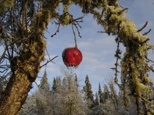 an apple in winter