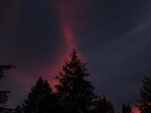 fierytree-01032017