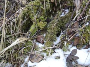 sbf-lichens-01152017