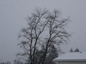 sbf-locust-tree-01072017