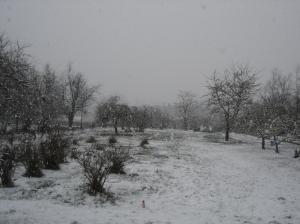 sbf-snow-1-01072017