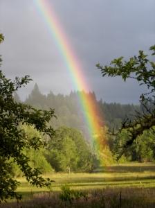 Rainbow in neighbor's field.