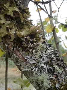 Lichen and moss community